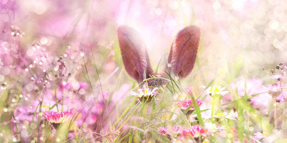 草原の中のうさぎ
