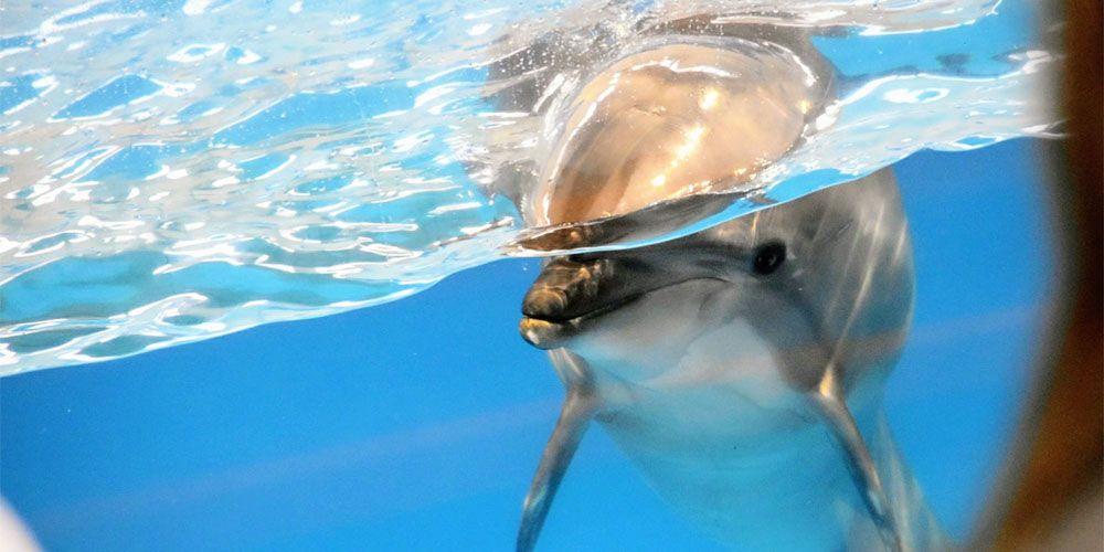 少し攻めた水族館デート
